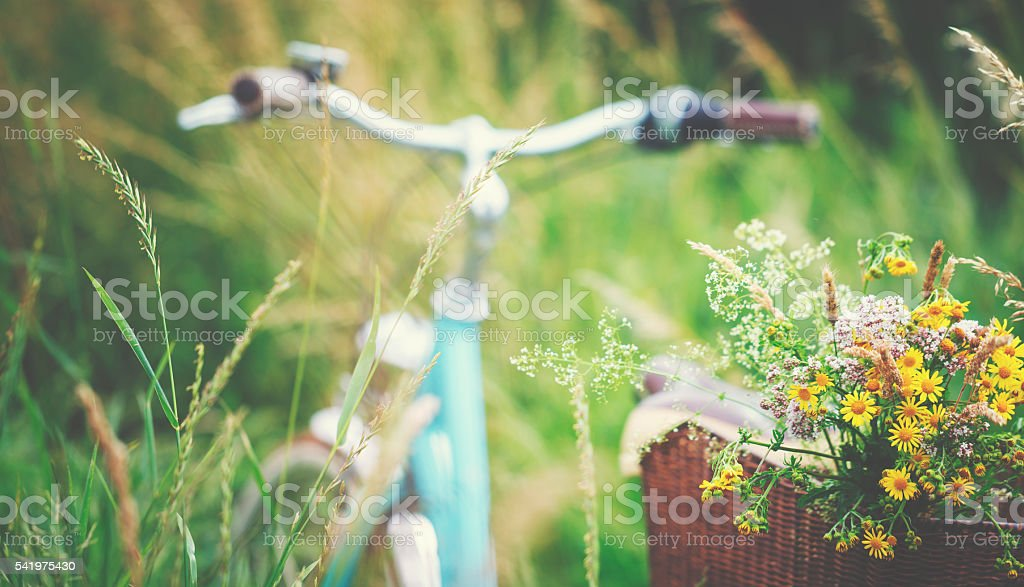 Light blue bicycle is parked with wild flowers in basket stock photo