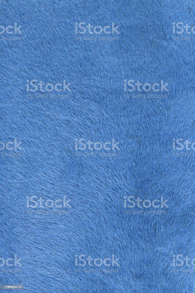 light blue fur stock photo