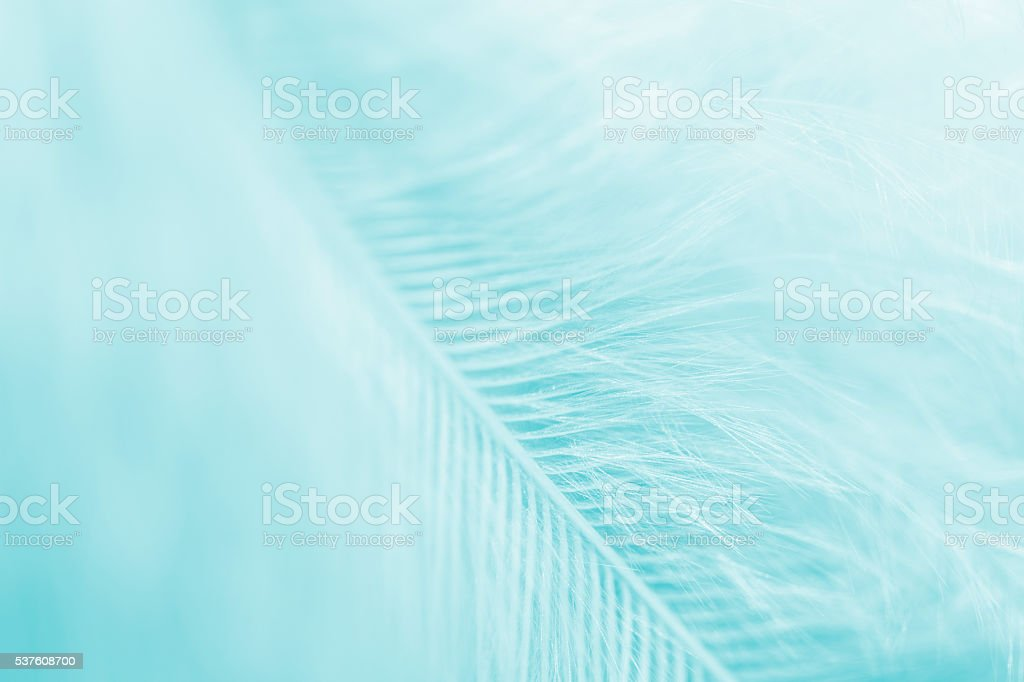 Light blue toned feather stock photo