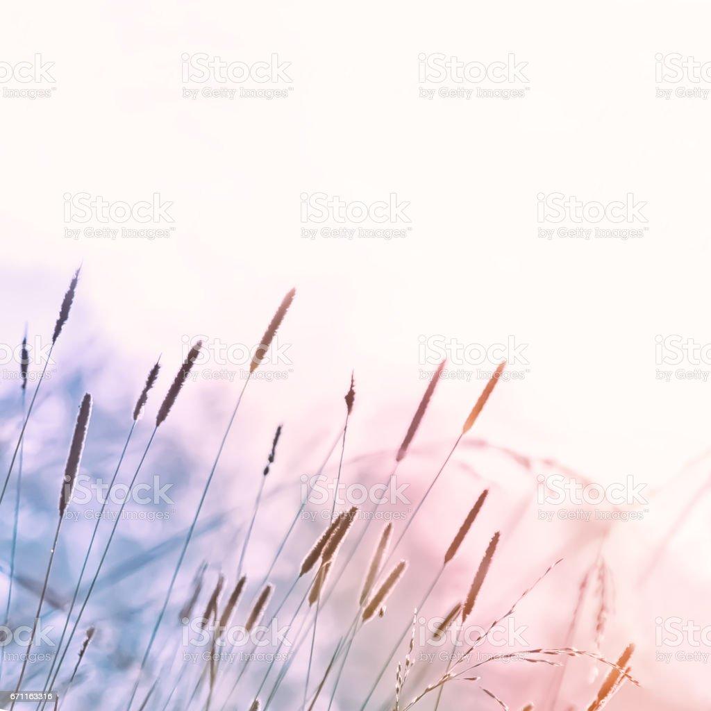 Light Blurred Herb Nature Background stock photo