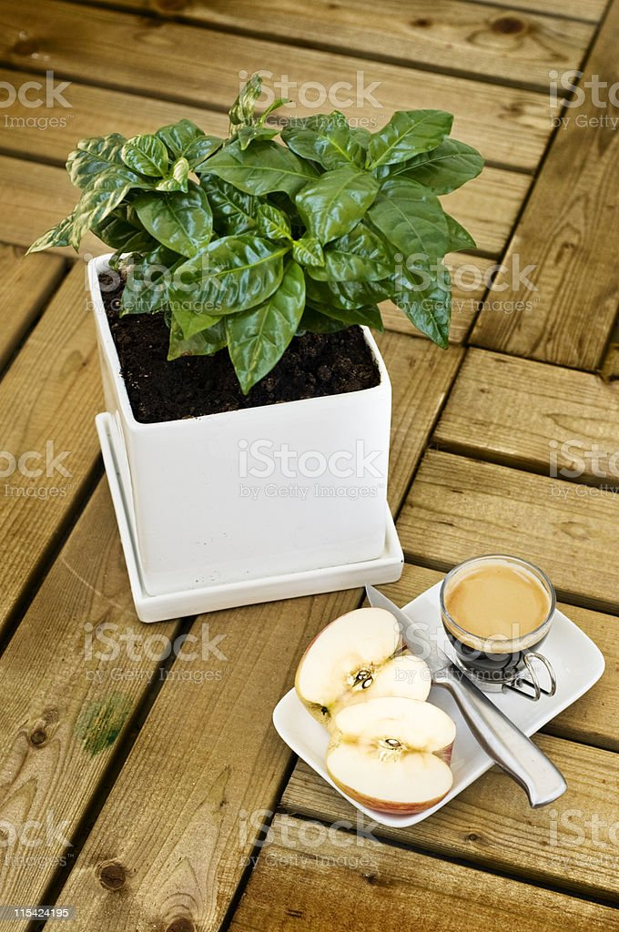 light breakfast royalty-free stock photo