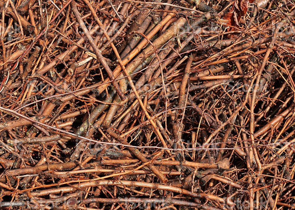 light brown twigs royalty-free stock photo