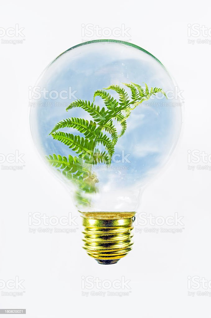 Light Bulb and Fern royalty-free stock photo
