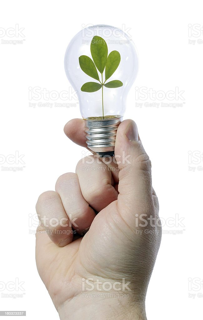 light bulb leaf royalty-free stock photo