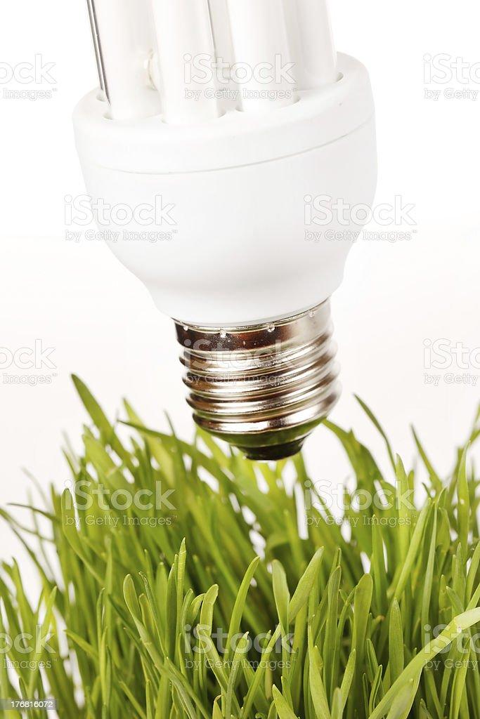 light bulb on a grass stock photo