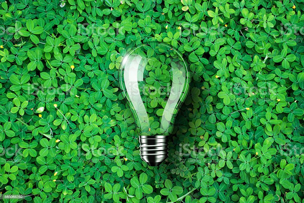 Light bulb on green grass background, concept idea stock photo