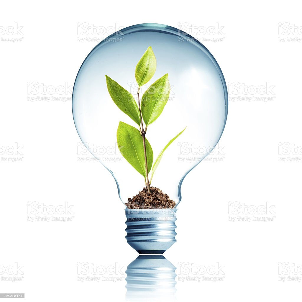 Light Bulb with green plant inside stock photo