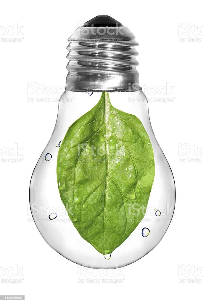 Light bulb with green spinach leaf royalty-free stock photo