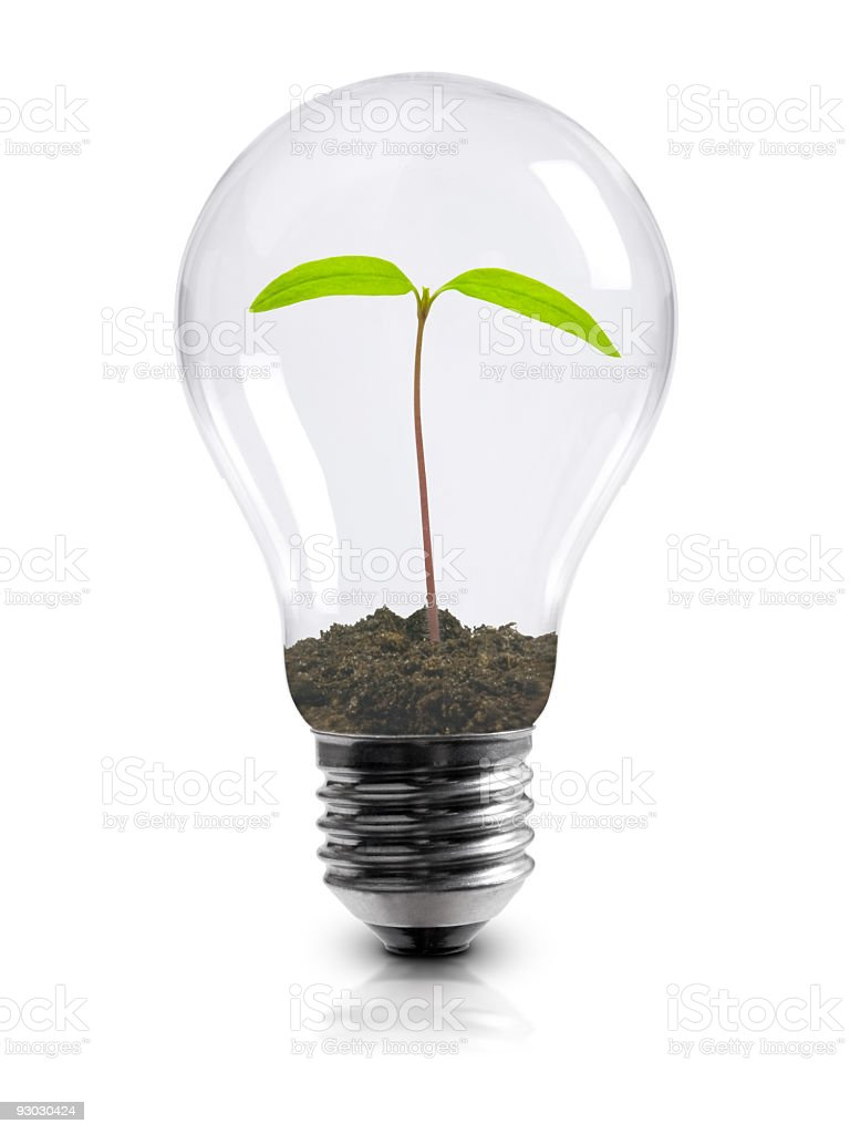 Light bulb with plant sprouting inside stock photo