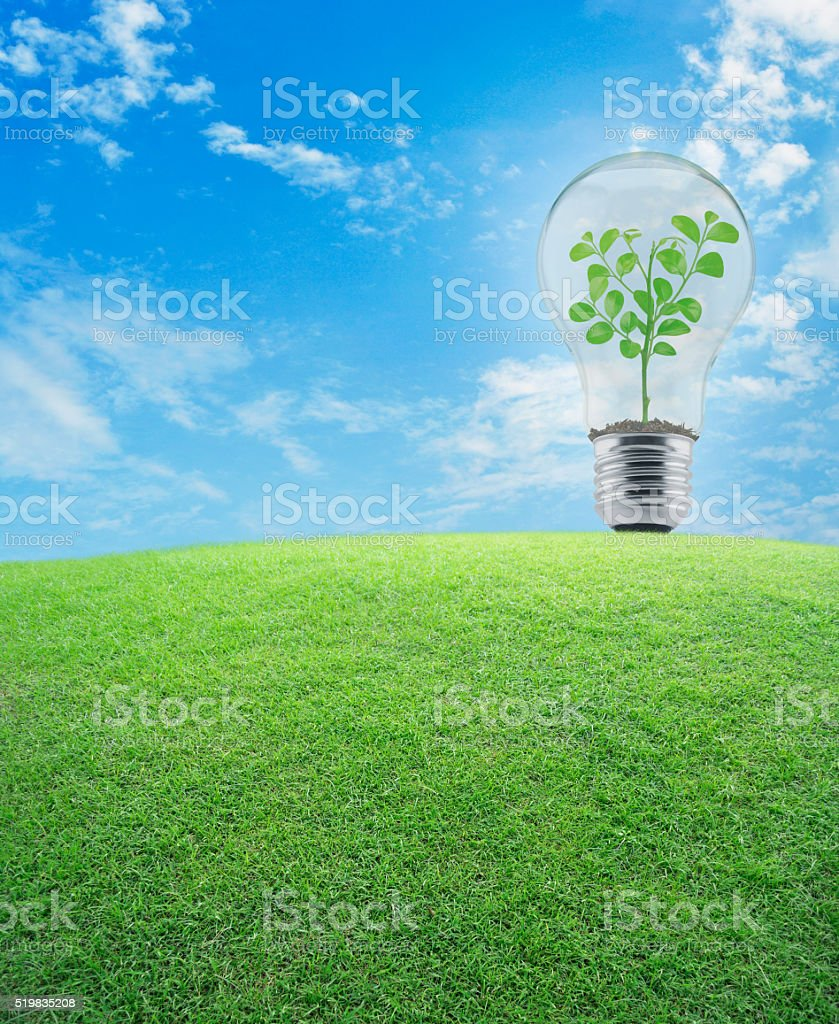 Light bulb with small plant inside and green grass field stock photo