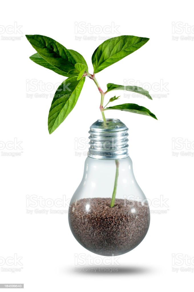 Light bulb with soil inside and green plant growing from it royalty-free stock photo