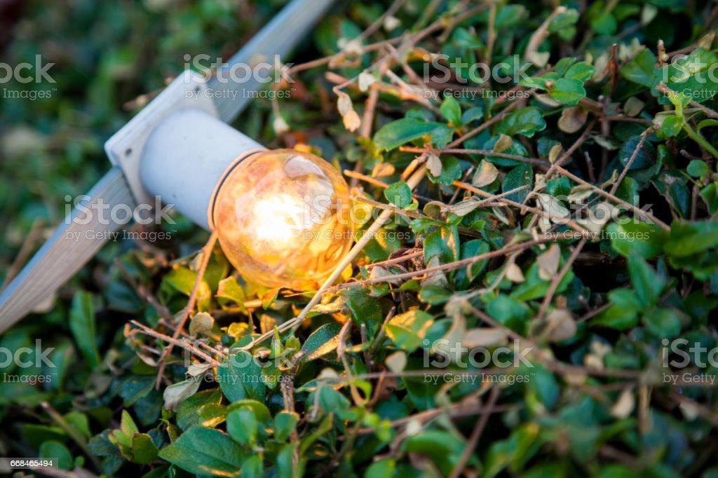 Light bulbs on bush stock photo