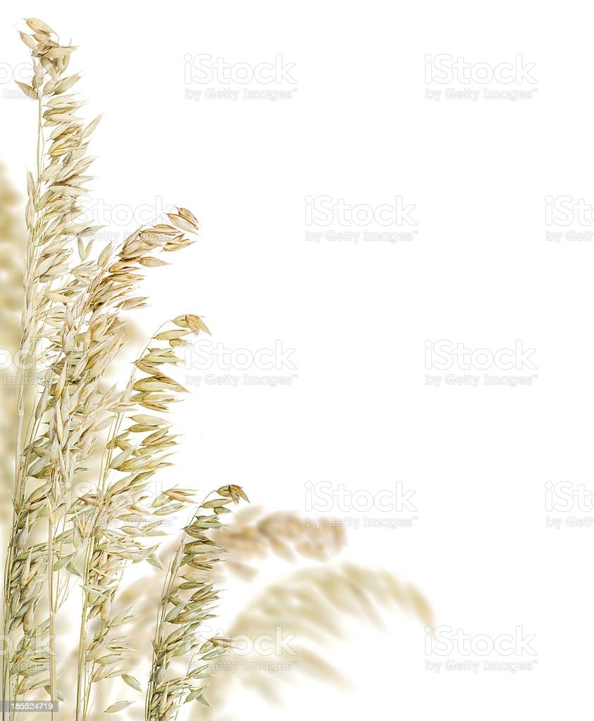 light color oat corner isolated on white stock photo