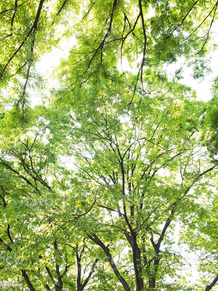 Light filtering through tree leaves stock photo