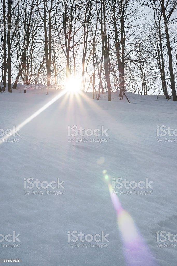Light flare in a snowcapped forest. stock photo