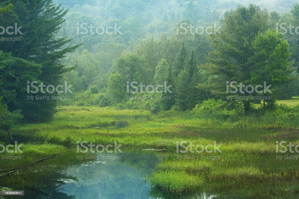 Light Fog Over Boggy Stream stock photo