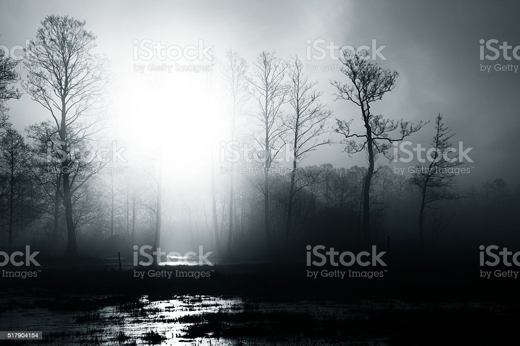 Light from forest stock photo