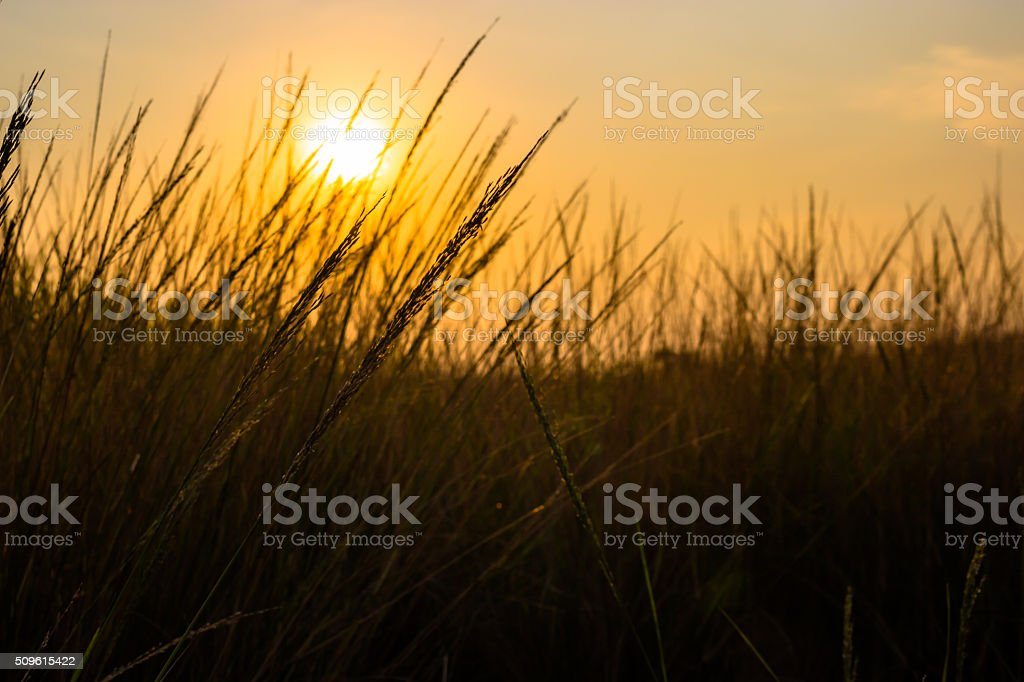 Light grassland guard cartridge such as the horizon. stock photo