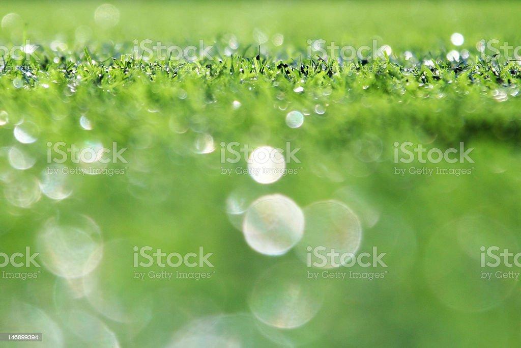 Light Green Grass royalty-free stock photo