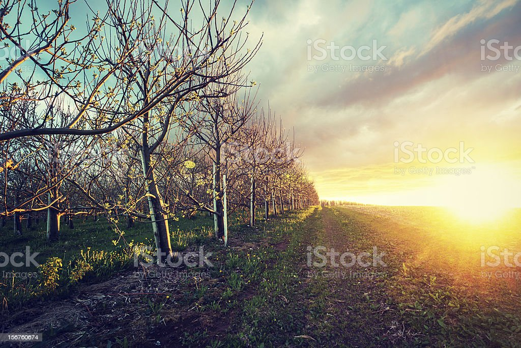 Light in Orchard stock photo
