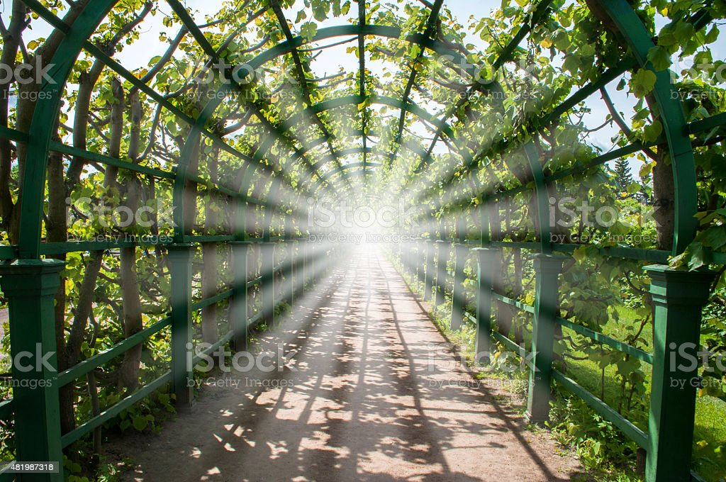 Light in the end of green tunnel stock photo