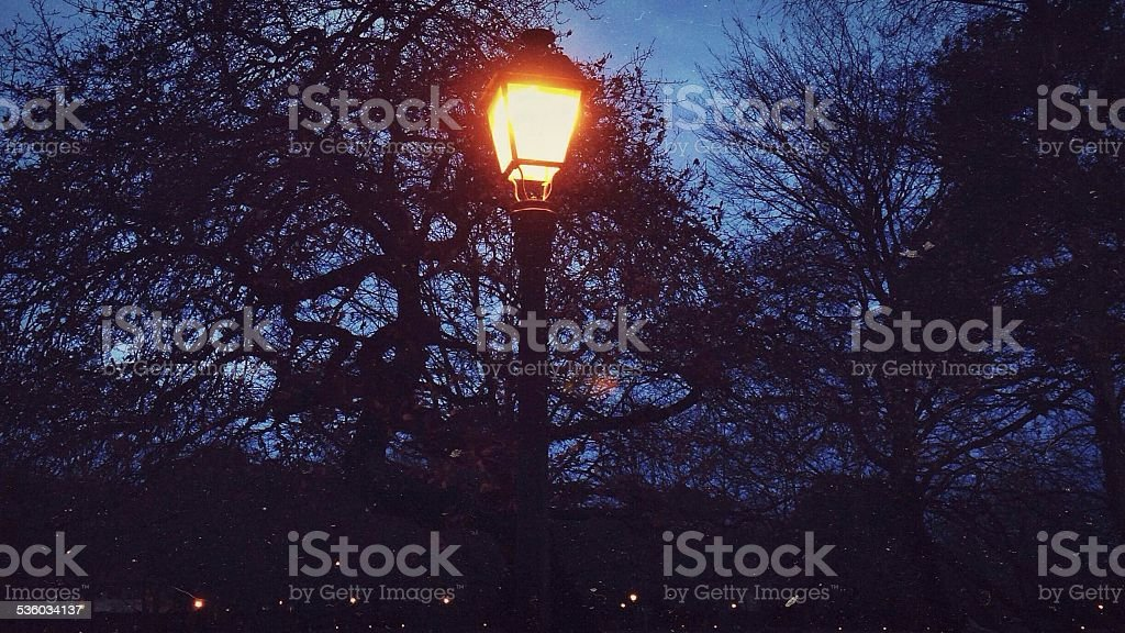 Light in the park stock photo