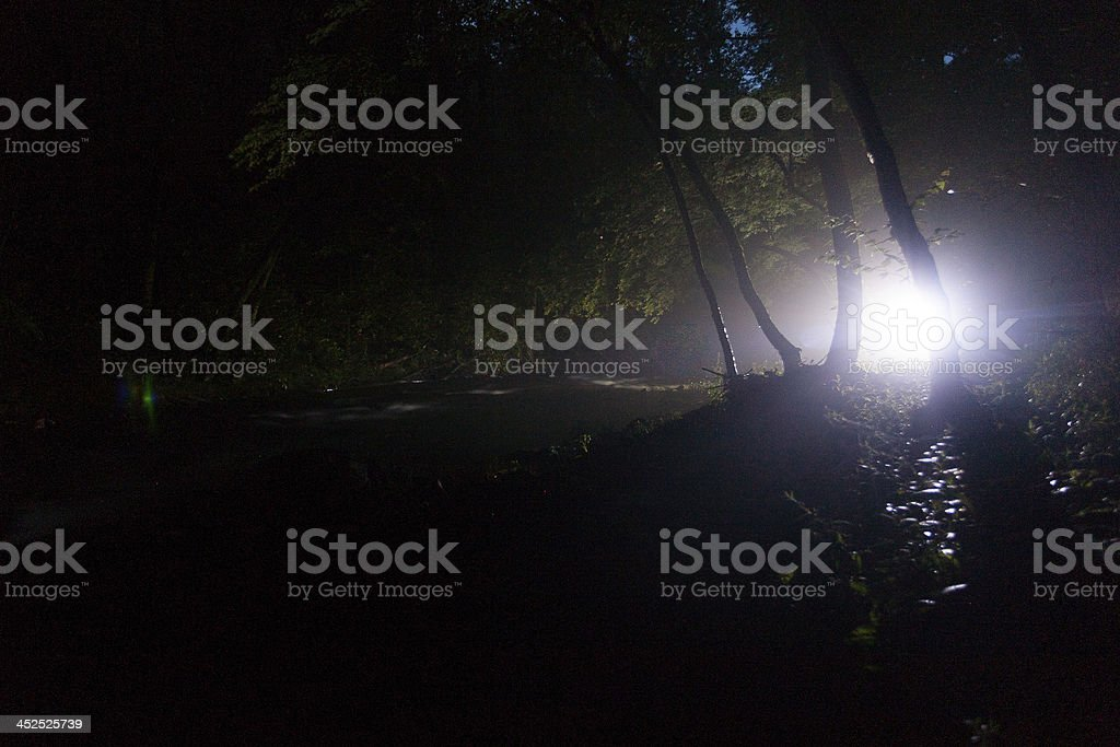 Light in the Woods stock photo