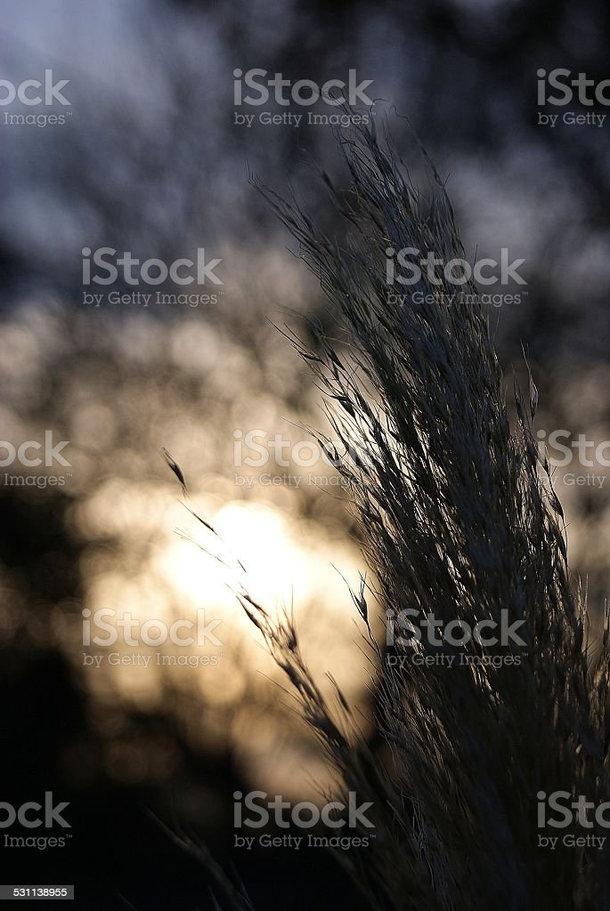Light Infused Grass royalty-free stock photo