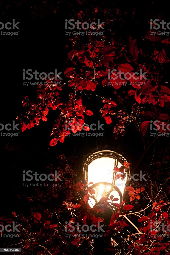 light of lamp through tree branches. stock photo