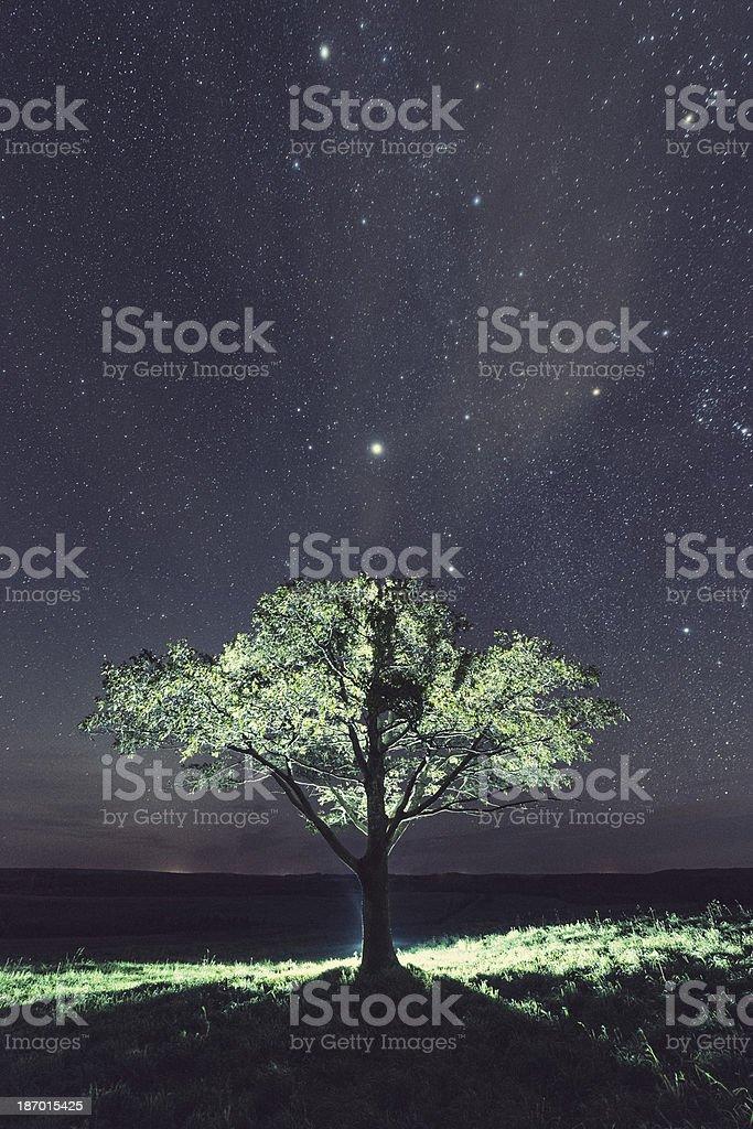 Light of the Stars royalty-free stock photo