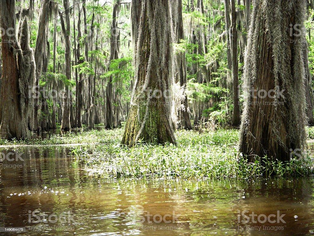 Light on the Bayou royalty-free stock photo