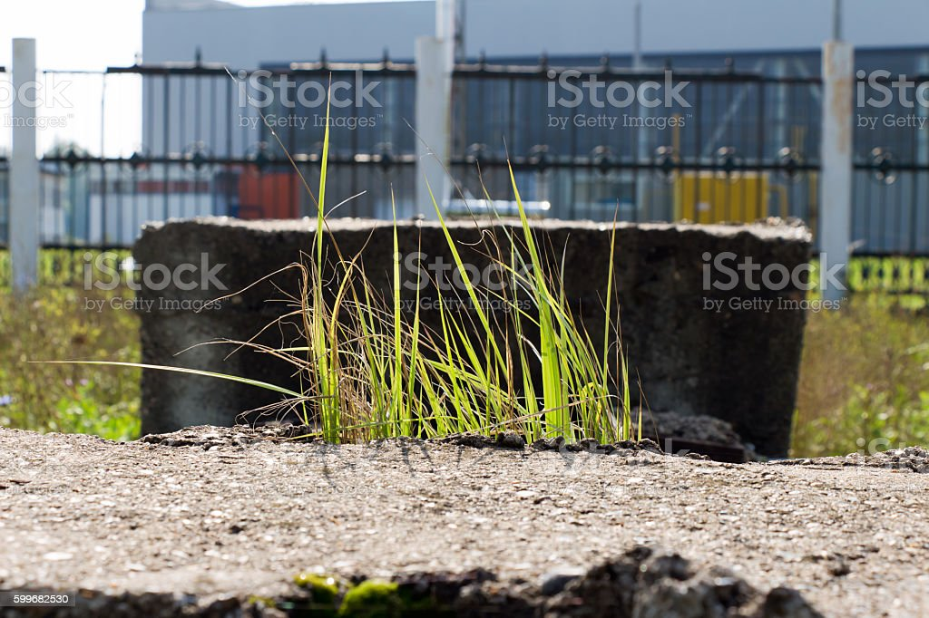 Light passes through the green blades of grass swaying in stock photo