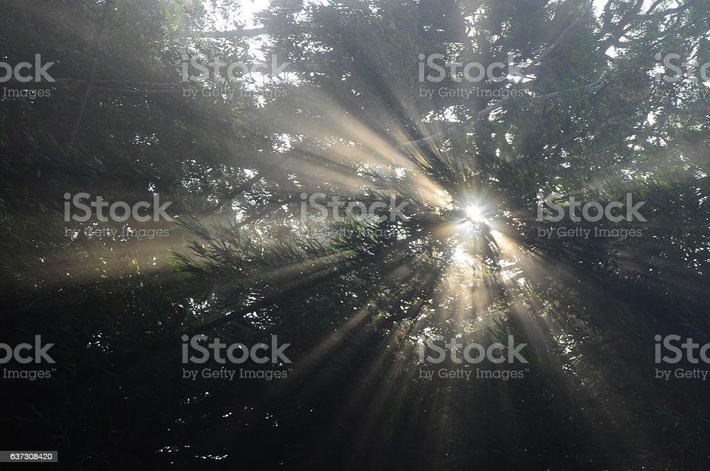 Light. stock photo