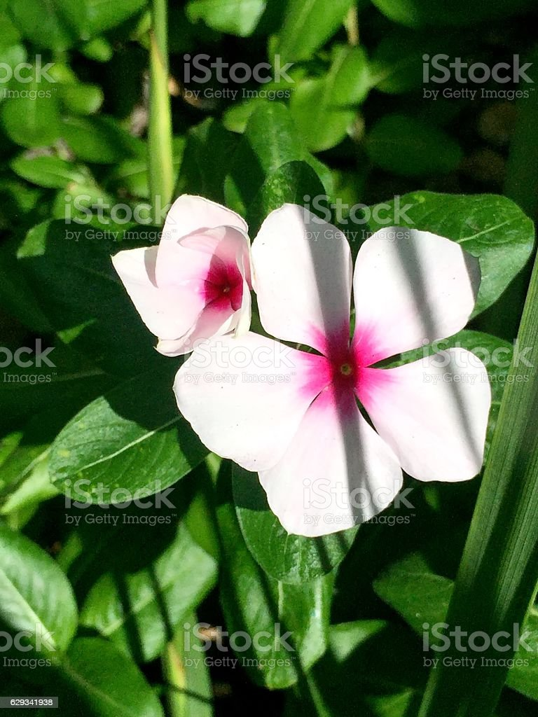 light pink and hot pink flower stock photo