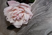 Light pink rose and white silk