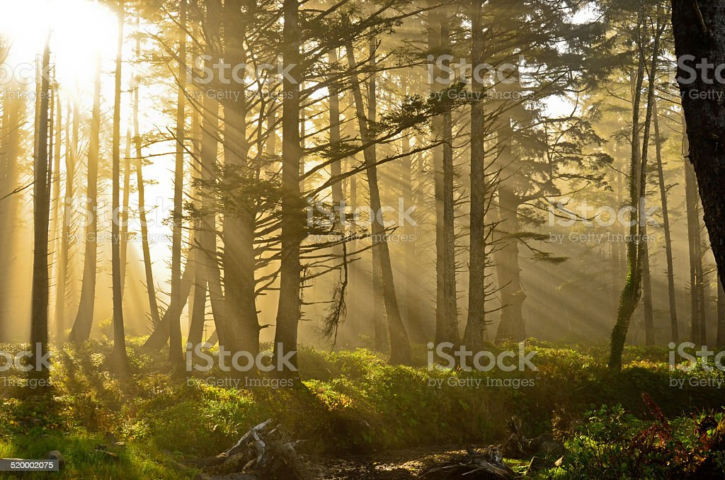 Легкие валы и петь через туман на лесной тропинке Стоковые фото Стоковая фотография