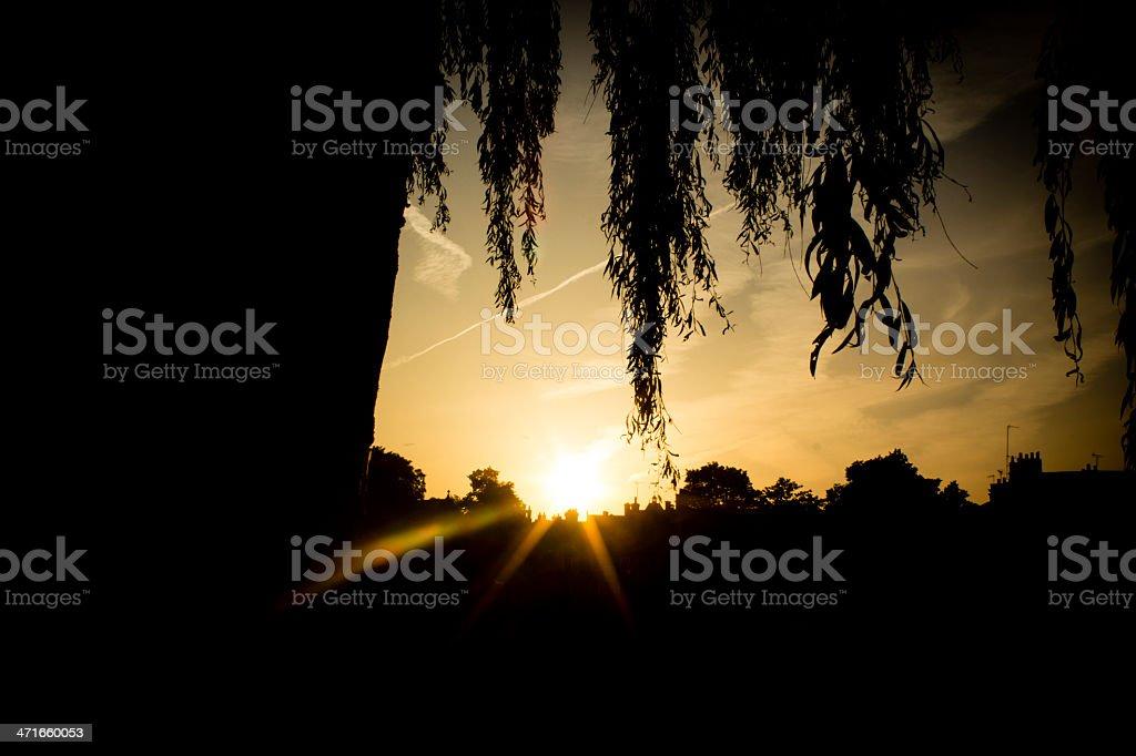 Light shines through royalty-free stock photo