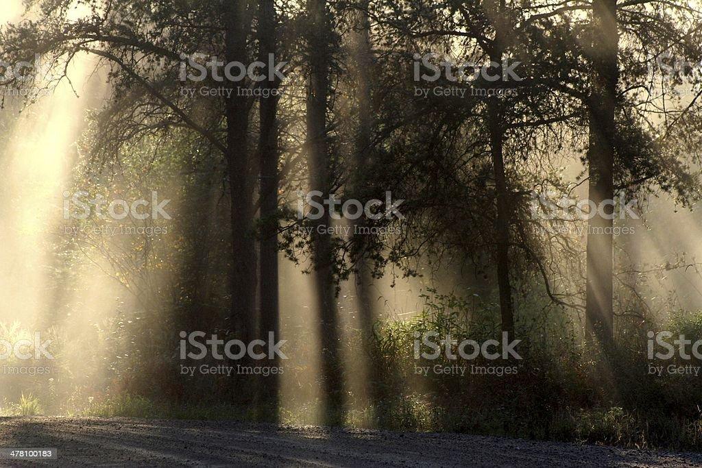 Light Stillness Shadow Movement stock photo