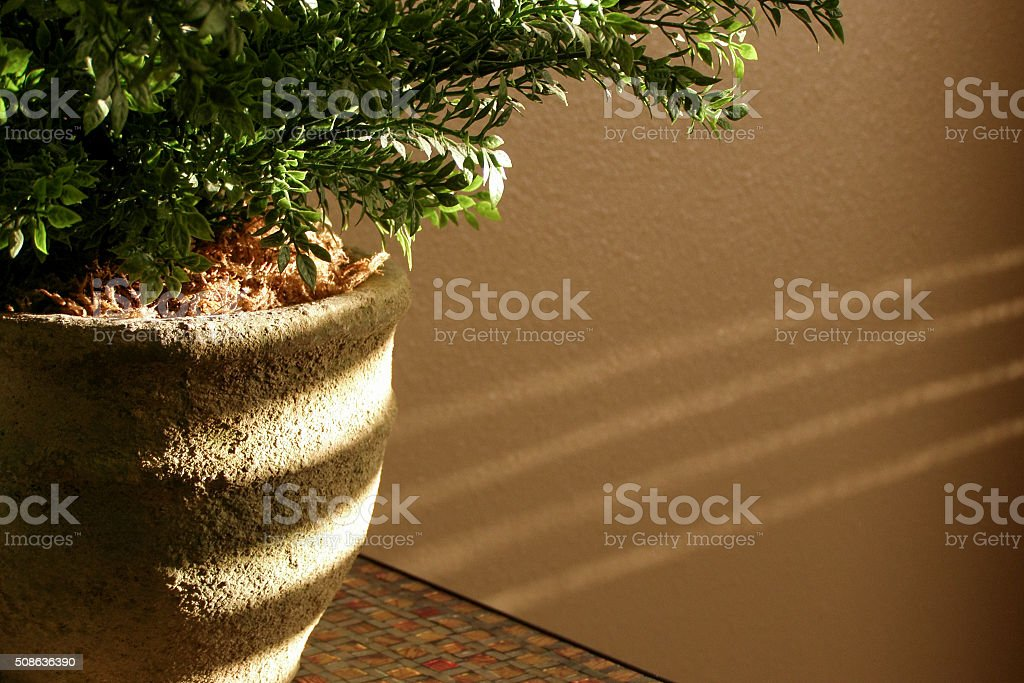 Light Streaks on Plant stock photo