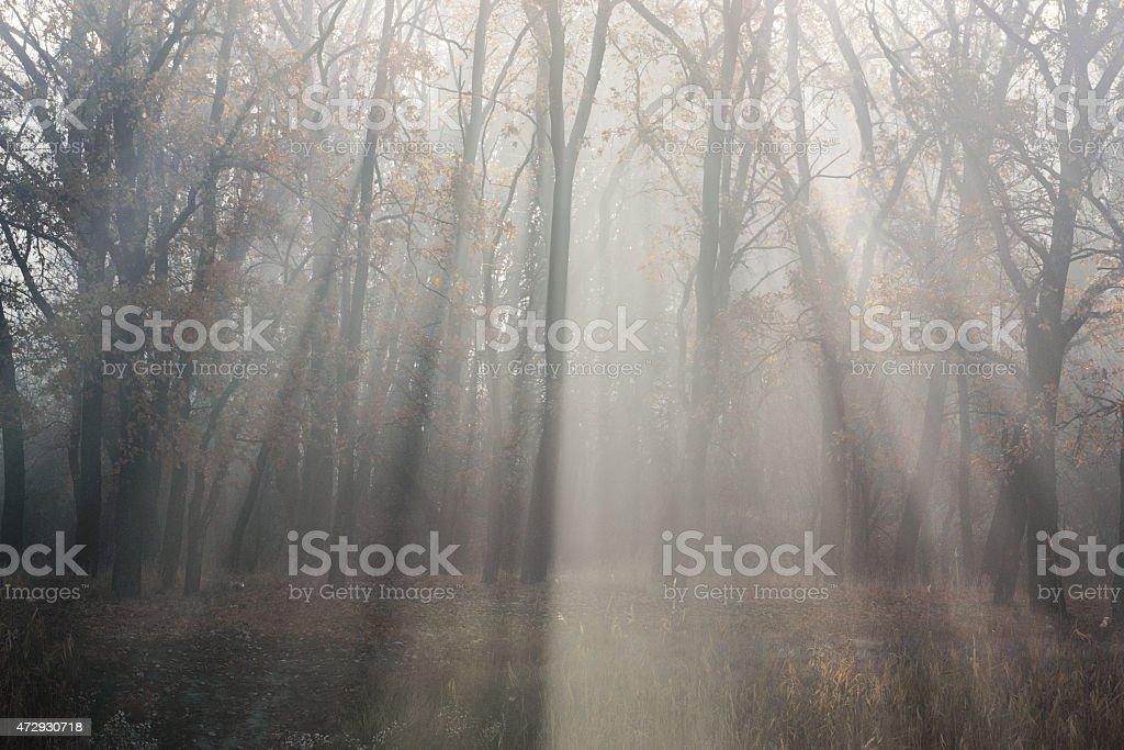 Luz sunrays foto de stock libre de derechos