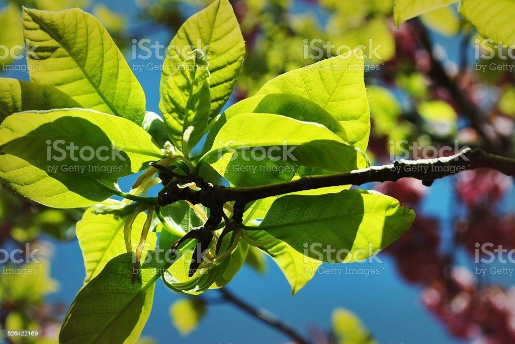 Tageslicht durch Blätter Lizenzfreies stock-foto