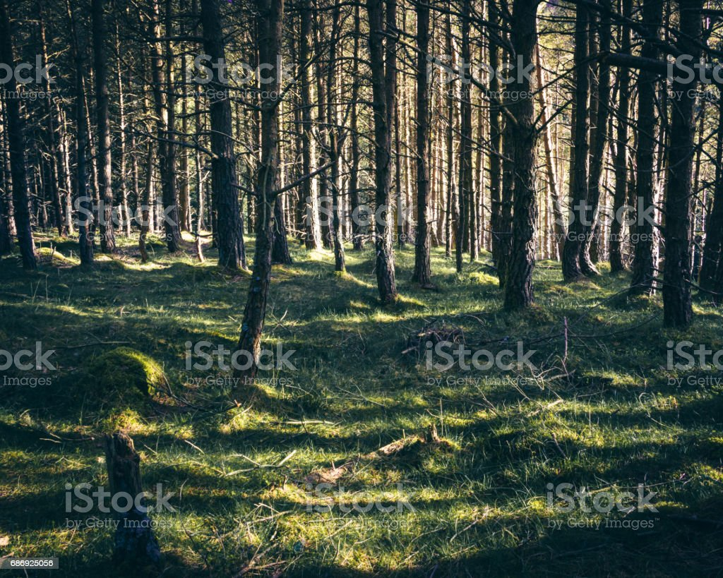 Light through the trees in the glen stock photo