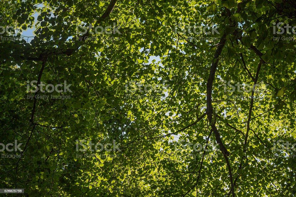 Luz através de árvores foto de stock royalty-free
