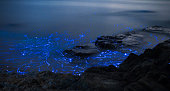 Light trails from bioluminescent sea fireflies floating in the ocean.