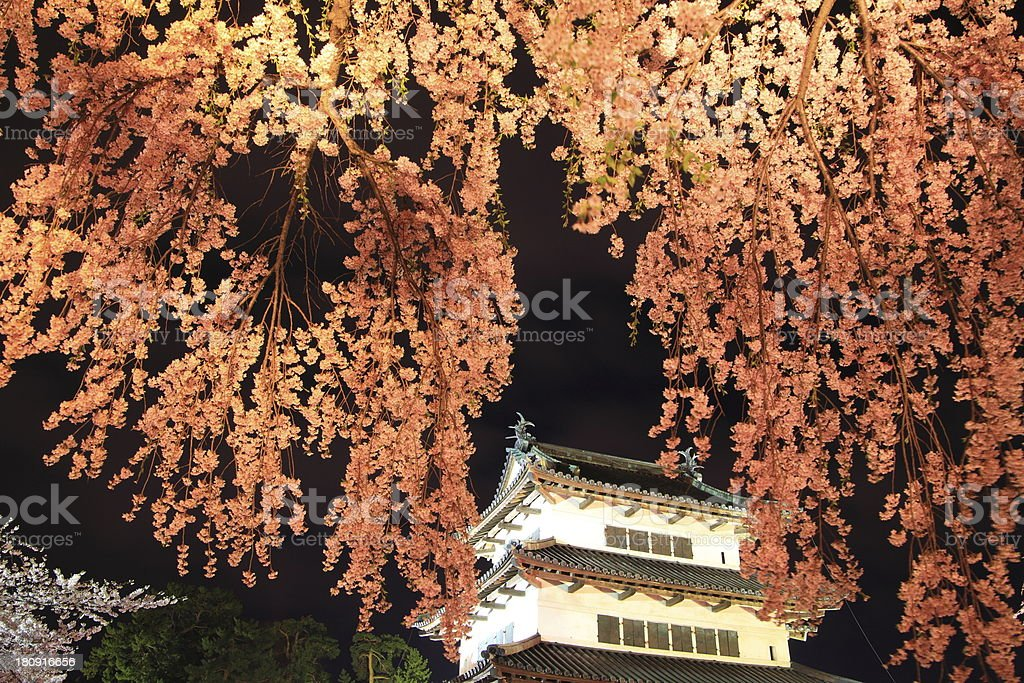 Light up of Hirosaki castle and cherry blossoms royalty-free stock photo