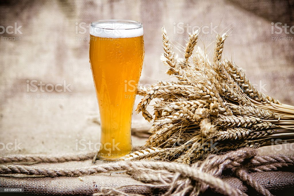 Light wheat beer and a bunch of wheat stock photo