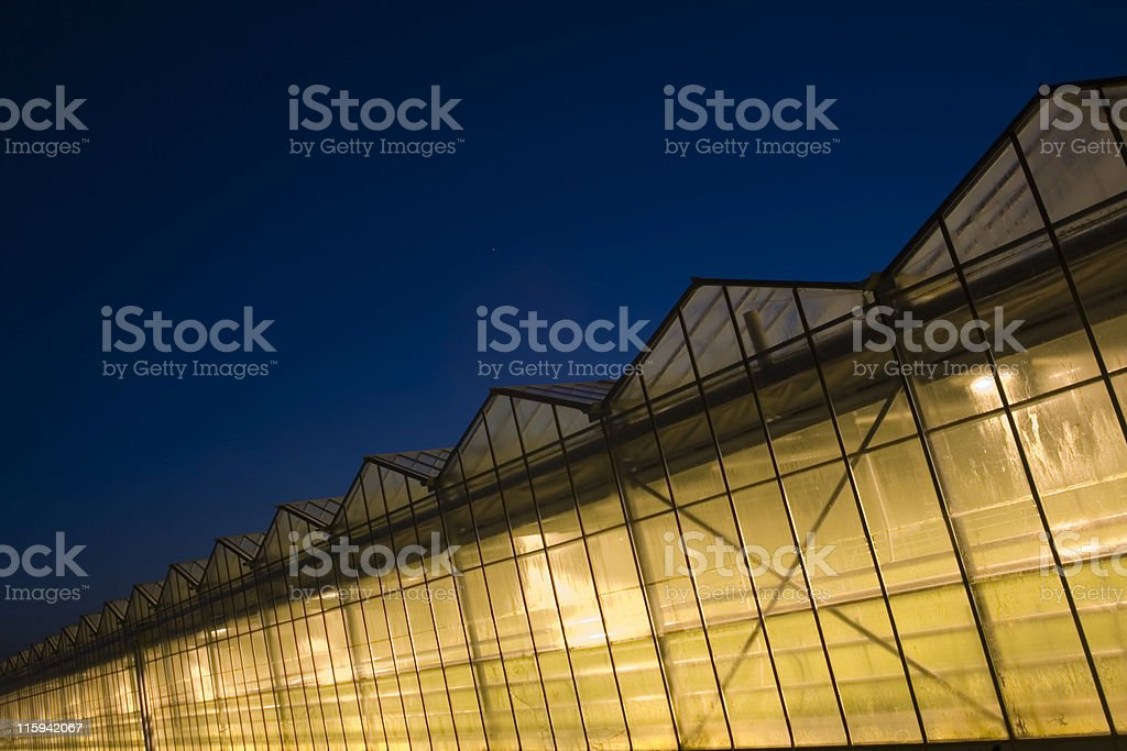 lighted greenhouses just after sunset royalty-free stock photo
