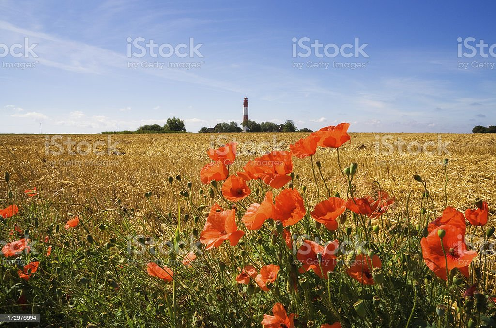 Lighthouse in Poppy - Fehmarn royalty-free stock photo
