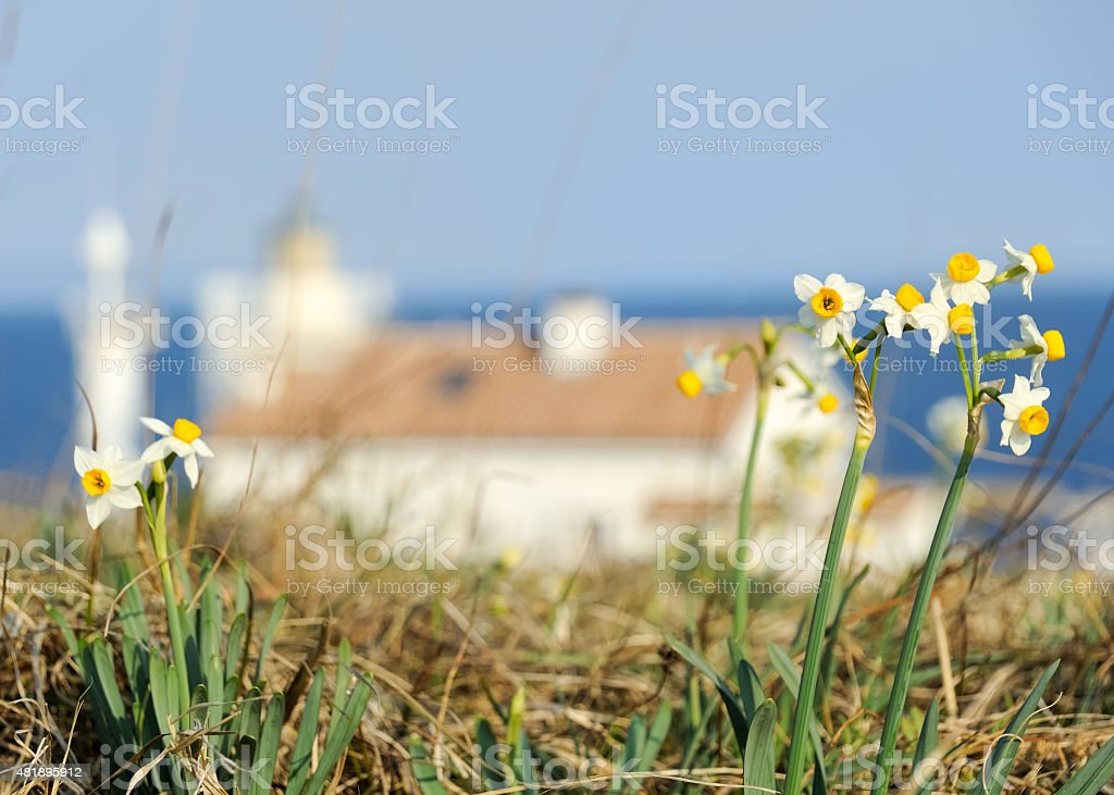 Lighthouse in the distance with flowers stock photo