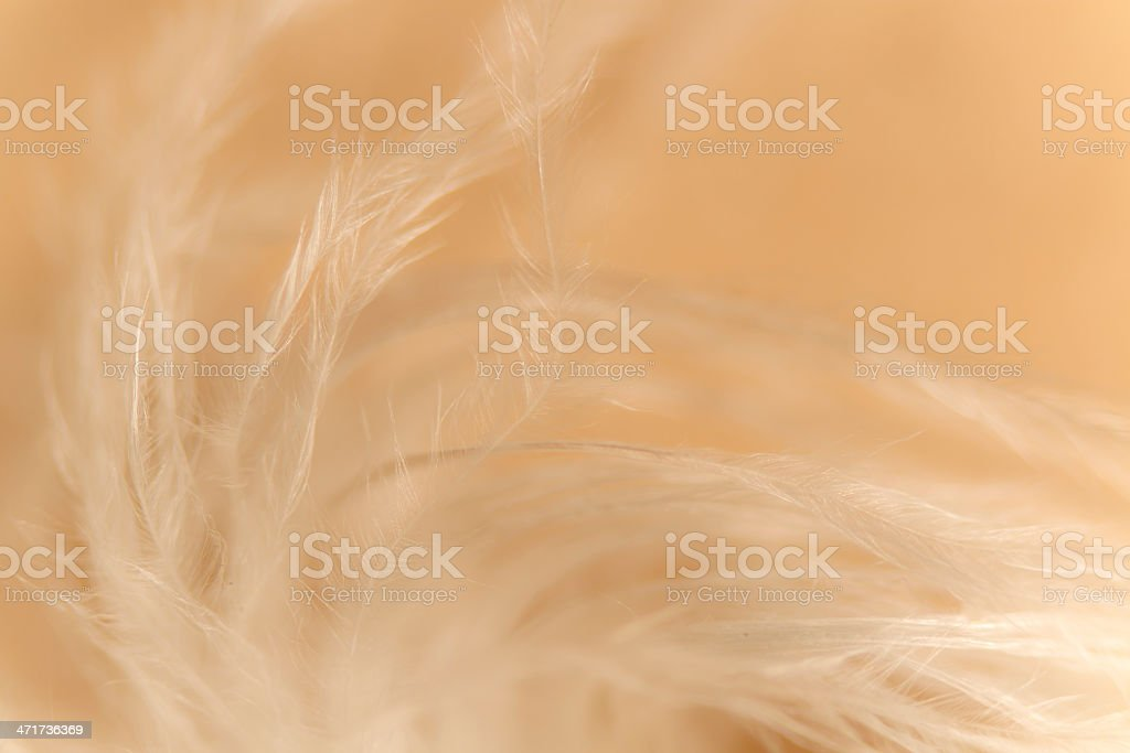 lightness effect of a feather's down stock photo